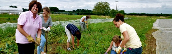 sutton-community-farm-about-us
