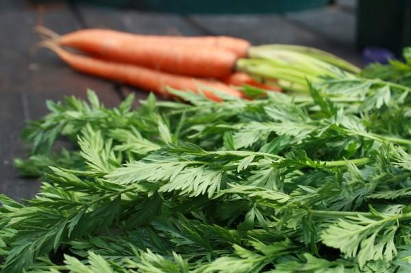 carrot-tops