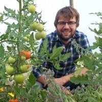 sam-tomatoes