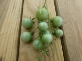 Fried Green Tomatoes Breakfast