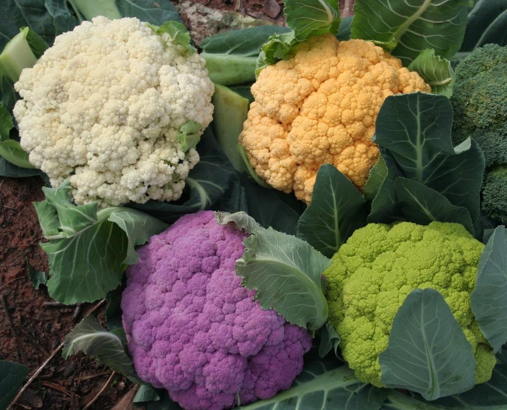 10 Alimentos Milagroso de Calorías Negativas Para Bajar Peso