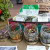Summer Herb Workshop with Herb Infusion Co. – 16th and 19th July